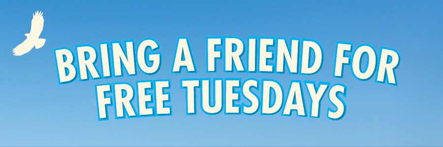 Web Banner_Bring a friend for free Tuesday_v2 (1)